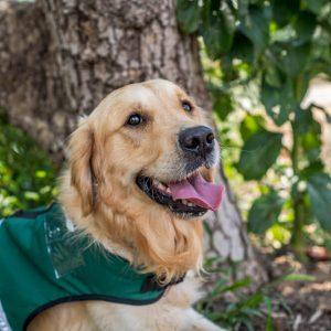 כלבי-שירות-המרכז-להכשרת-כלבי-שירות (15)