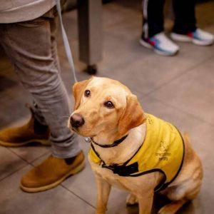 כלבי-שירות-המרכז-להכשרת-כלבי-שירות (17)
